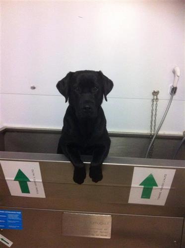 Wellness Dog Udine foto 183