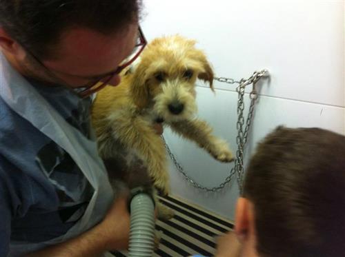 Wellness Dog Udine foto 215