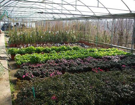 Garden Malquori Poggibonsi foto 4
