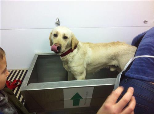 Wellness Dog Udine foto 86