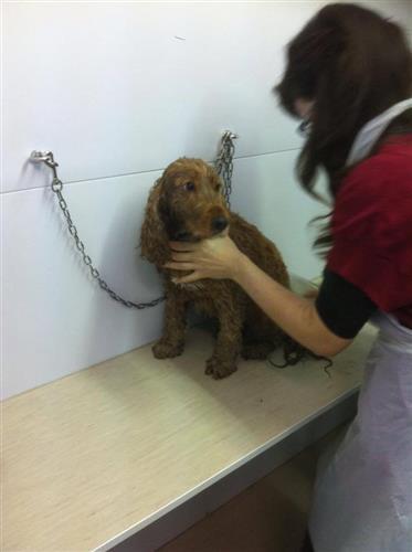 Wellness Dog Udine foto 185