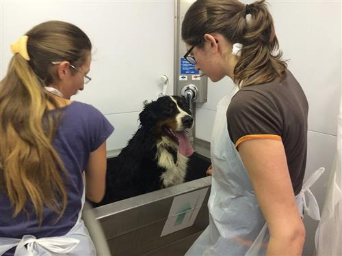 Wellness Dog Udine foto 248
