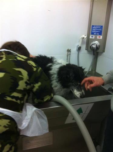 Wellness Dog Udine foto 186