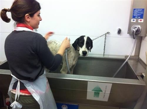 Wellness Dog Udine foto 39