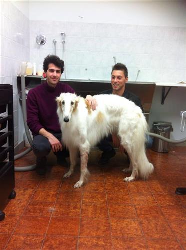 Wellness Dog Udine foto 88