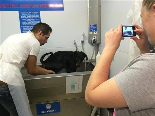 Wellness Dog Udine foto 271