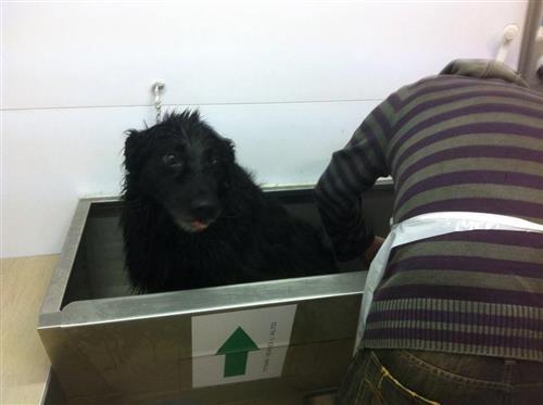 Wellness Dog Udine foto 191