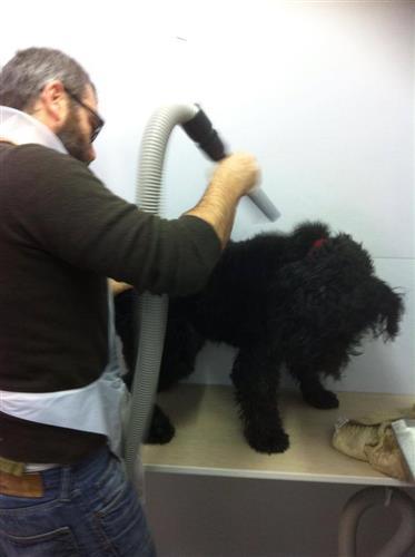 Wellness Dog Udine foto 192
