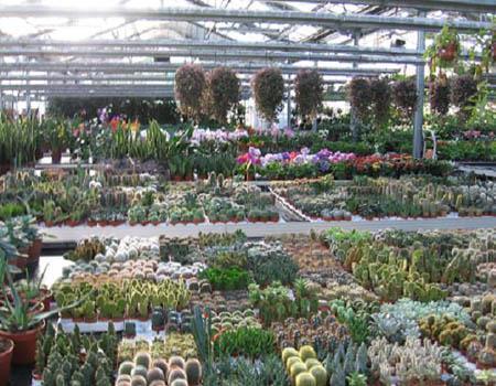 Garden Malquori Poggibonsi foto 5