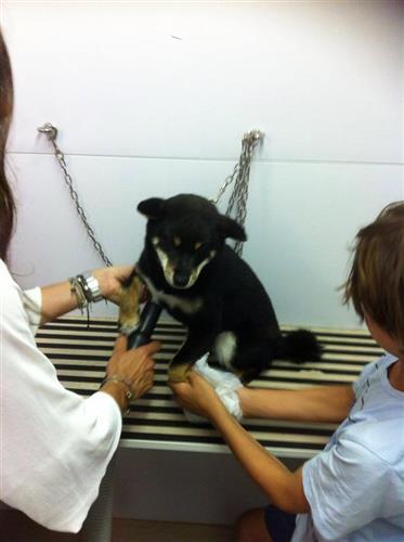 Wellness Dog Udine foto 212
