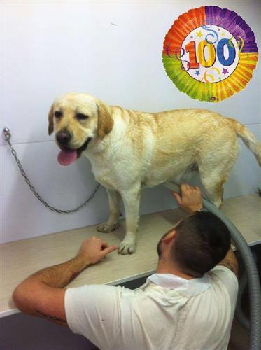 Wellness Dog Udine foto 193