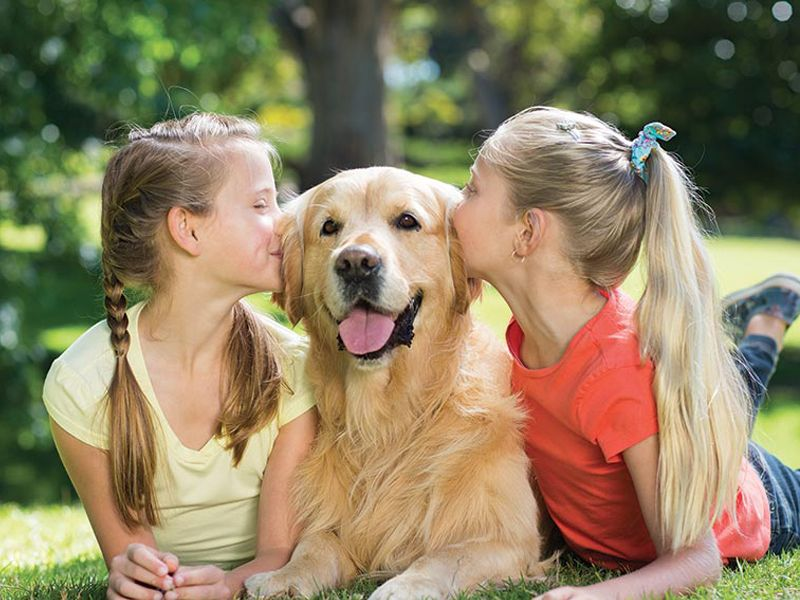 promozione offerta occasione mangimi kiramore cane e gatto vedelago