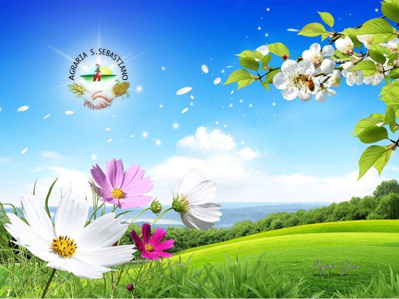 Occasione piantine - Promozione piante Vedelago - Offerta fiori Vedelago - Agraria S.Sebastiano