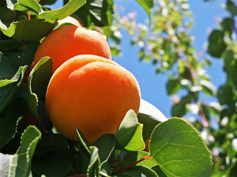 piante da frutto in promozione scopri