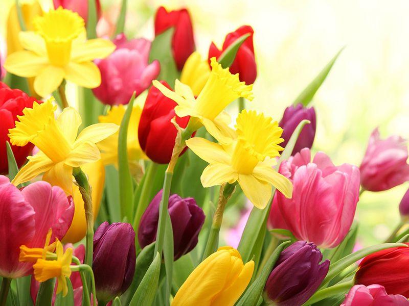 fiori primaverili per il tuo giardino clicca qui