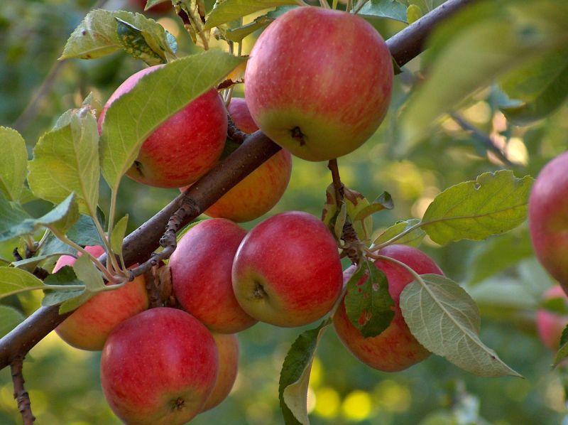 assortimento piante da frutto e orto vicenza