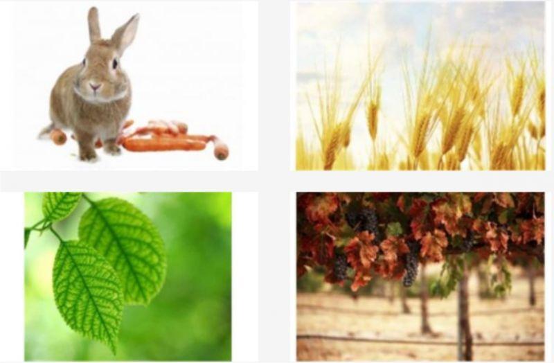 Offerte mangimi animali - Promozione cura piante - Agraria Vannacci