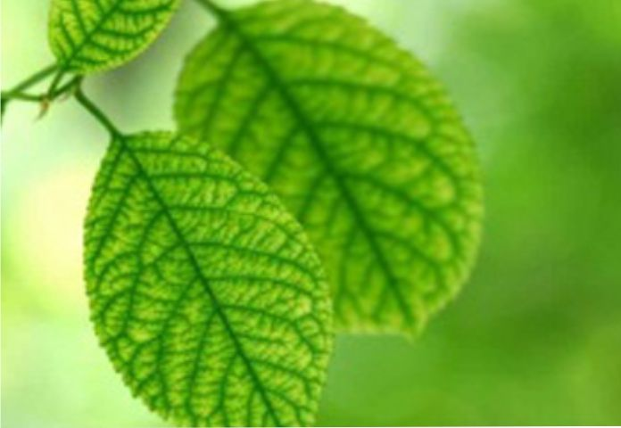 Promozione articoli piante - Offerta attrezzature piante - Agraria Vannacci