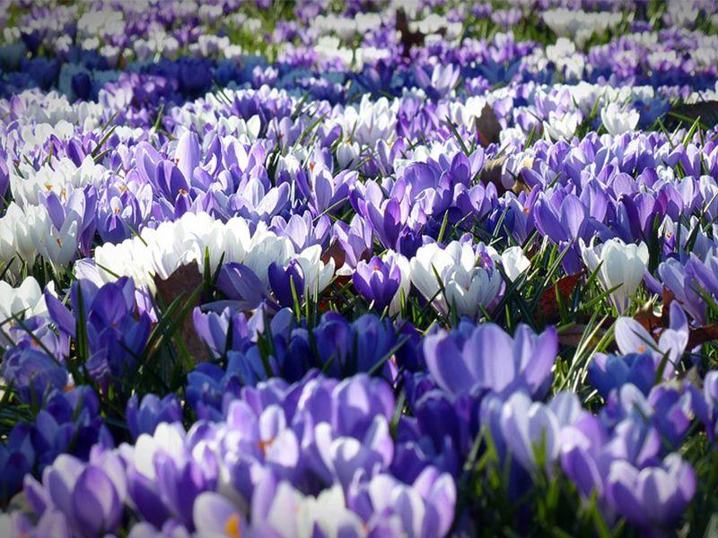 produzione e vendita di piante e fiori vicenza