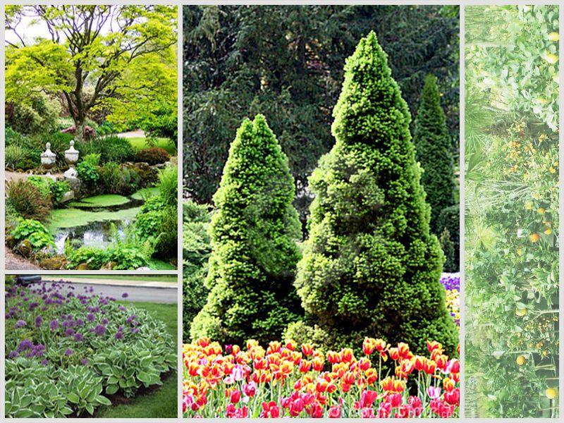 Offerta Giardino Vedelago - Promozione Siepe Vedelago -  Dream Garden