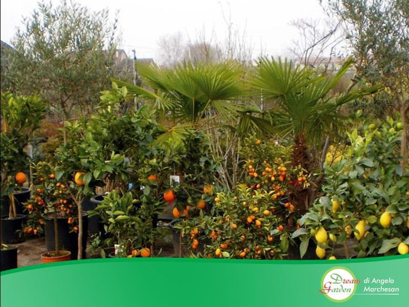 Promozione Vivaio Treviso - Offerta vendita piante Treviso - Occasione Giardino - Dream Garden