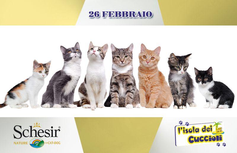 offerta alimenti cani gatti schesir -promozione prodotti schesir isola dei cuccioli