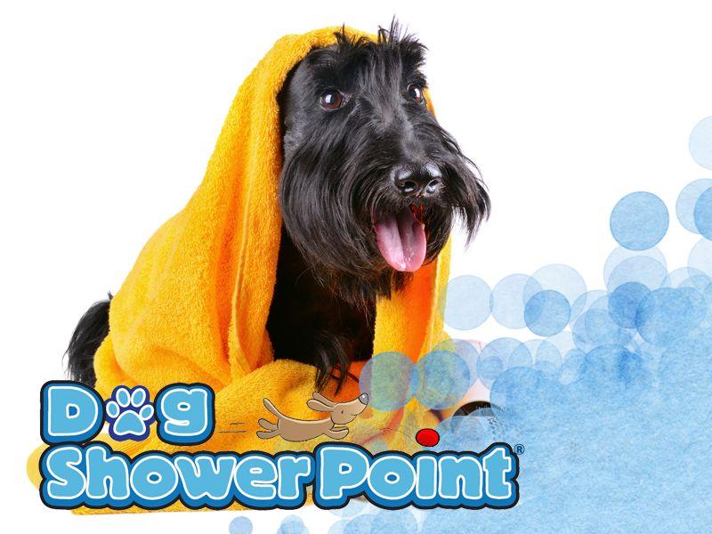 offerta toelettatura self service - promozione toelettatura cani terni - dog shower