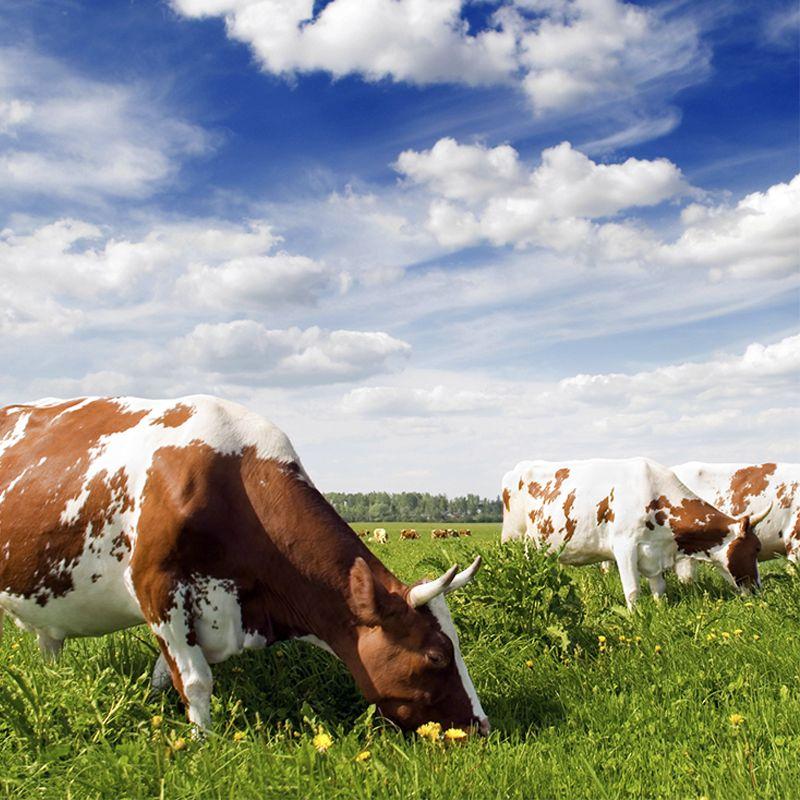 produzione e vendita attrezzature professionali per bovini da ingrasso vicenza fontana f lli