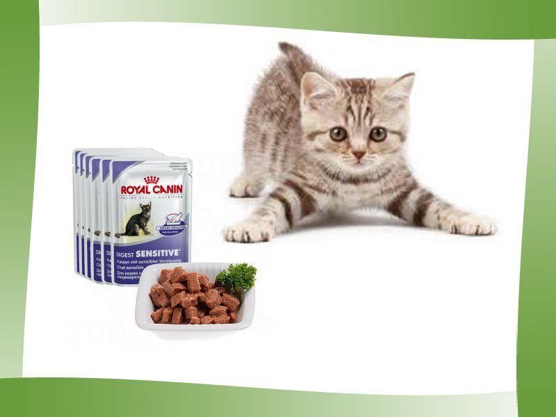 promozione offerta occasione royal canin cibo umido gatti cosenza