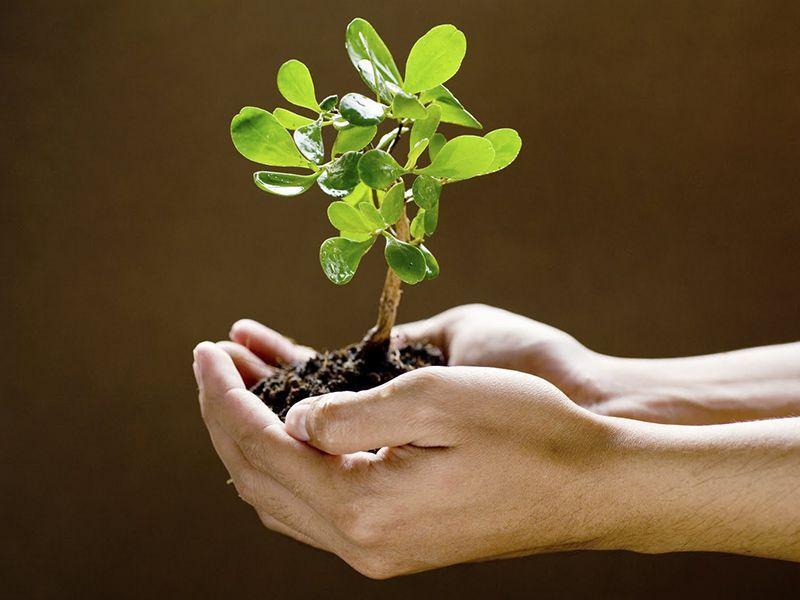 Offerta Prodotti  Servizi per Agricoltura - promozione Da Carmelo Natura e Agricoltura vicenza