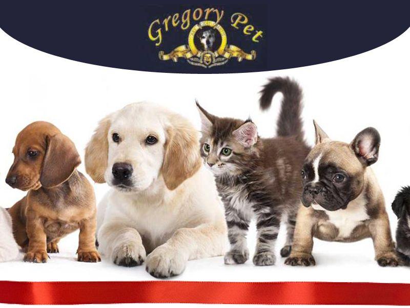 Offerta - Occasione - Promozione - Accessori Cane Gatto Terni