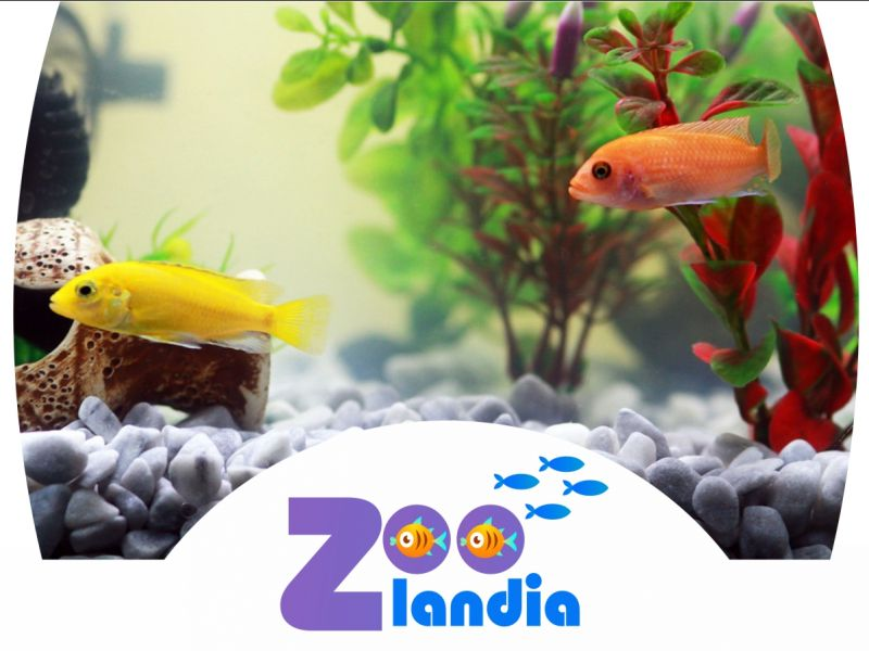 acquariofilia cura dellacquario zoolandia