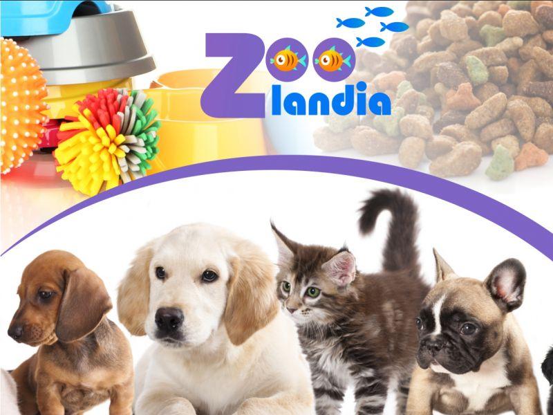 negozio animali alimenti per animali zoolandia