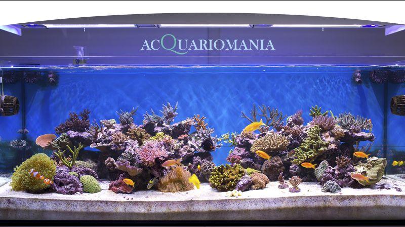 occasione vendita acquari pesci esotici e tanto altro a chieri
