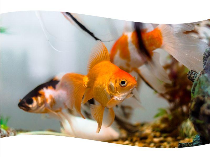 promozione offerta occasione manutenzione e assistenza acquari chieri