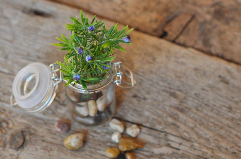 Erbe aromatiche | Vivai Mari