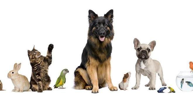 Da Sapas Pet ad Arezzo trovi tutto per i tuoi amici animali!