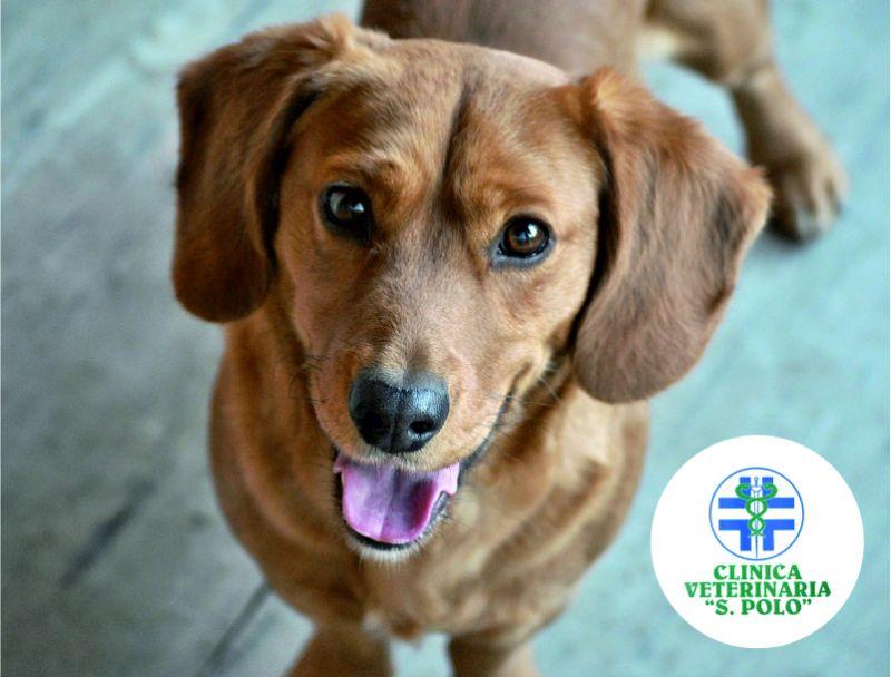 offerta medicina interna veterinaria san polo brescia-promozione clinica veterinaria san polo