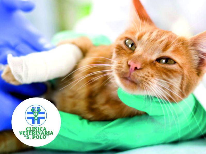 offerta ortopedia veterinaria san polo brescia-promozione clinica veterinaria s polo brescia