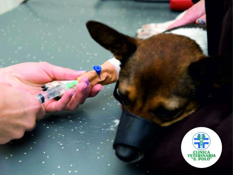 offerta vaccinazioni clinica san polo brescia-clinica veterinaria vaccini san polo brescia