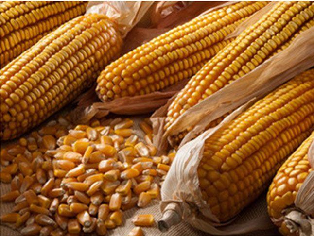 Offerta vendita prodotti per agricoltura biologica-Promozione-Verona CDA PUNTO VERDE SRL