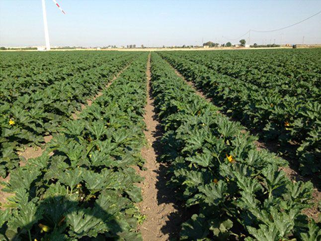 Offerta vendita prodotti per agricoltura convenzionale - Promozione Verona CDA PUNTO VERDE SRL
