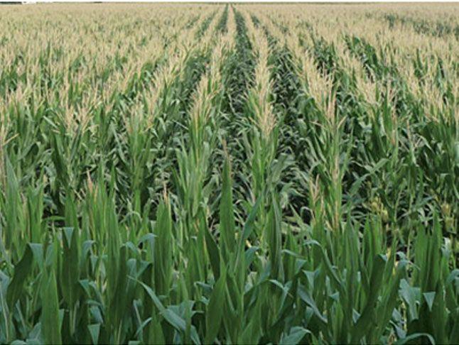Offerta nutrizione e difesa delle piante-Promozione prodotti a residuo zero e biologici-Verona