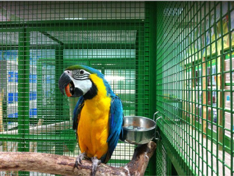 vasta esposizione di animali presso il giardino dei tesori ad altopascio