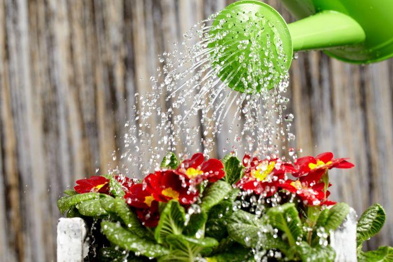 offerta vendita concimi liquidi per fiori - occasione vendita terricci per fiori e sementi