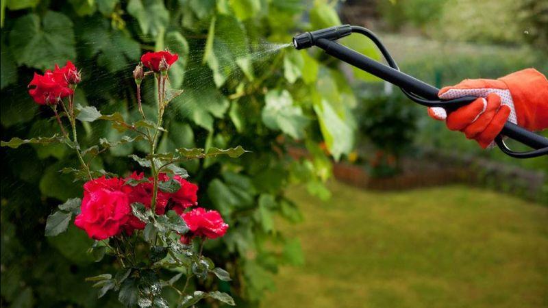 offerta vendita insetticidi per piante - occasione vendita antiparassitari per piante vicenza