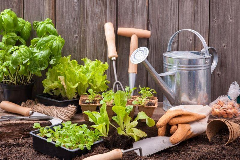offerta vendita sementi orto piantine da orto - occasione vendita  semi bulbi da fiore vicenza