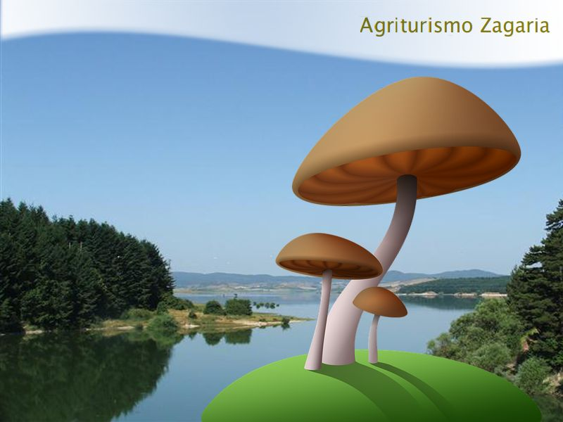 promozione offerta occasione agriturismo zagaria sagra del fungo sila