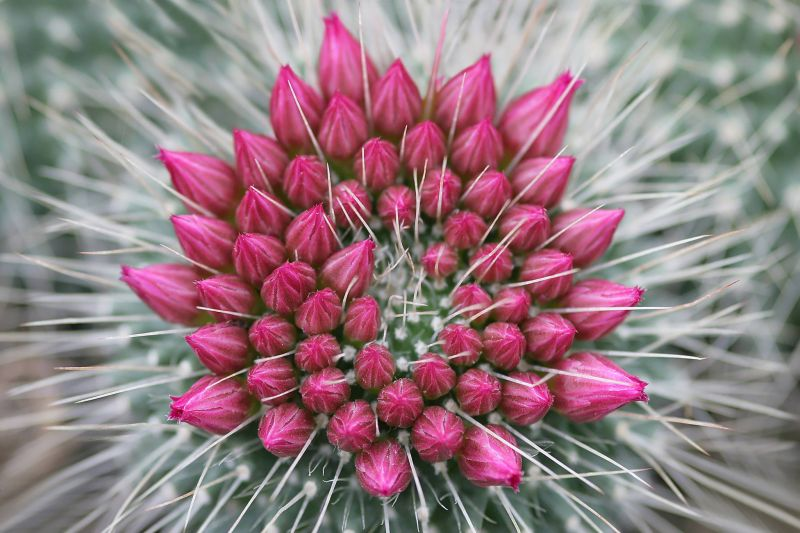 Vendita Cactus e Piante Grasse Particolari