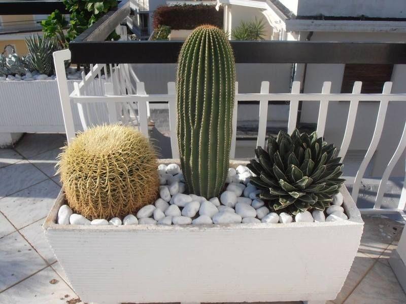 Realizzazione Terrazzi Giardini con Cactus e Succulente